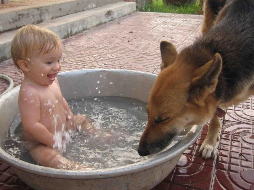 dog-brings-joy