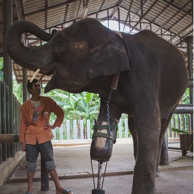 injured-elephant