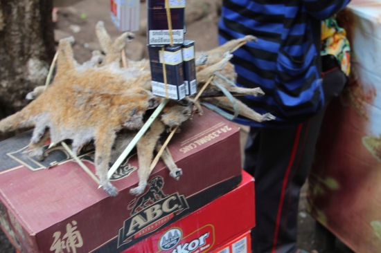 Slow Loris skins sold at local market for medicinal purposes.