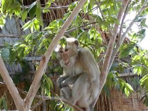 biting-monkey