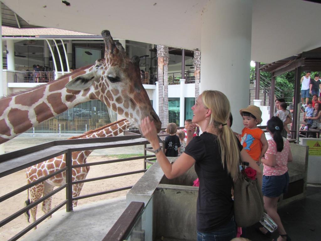 ann-feeding-giraffe