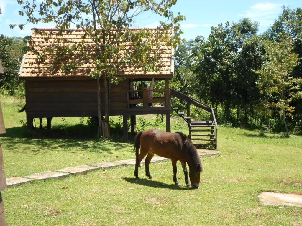 My cabin