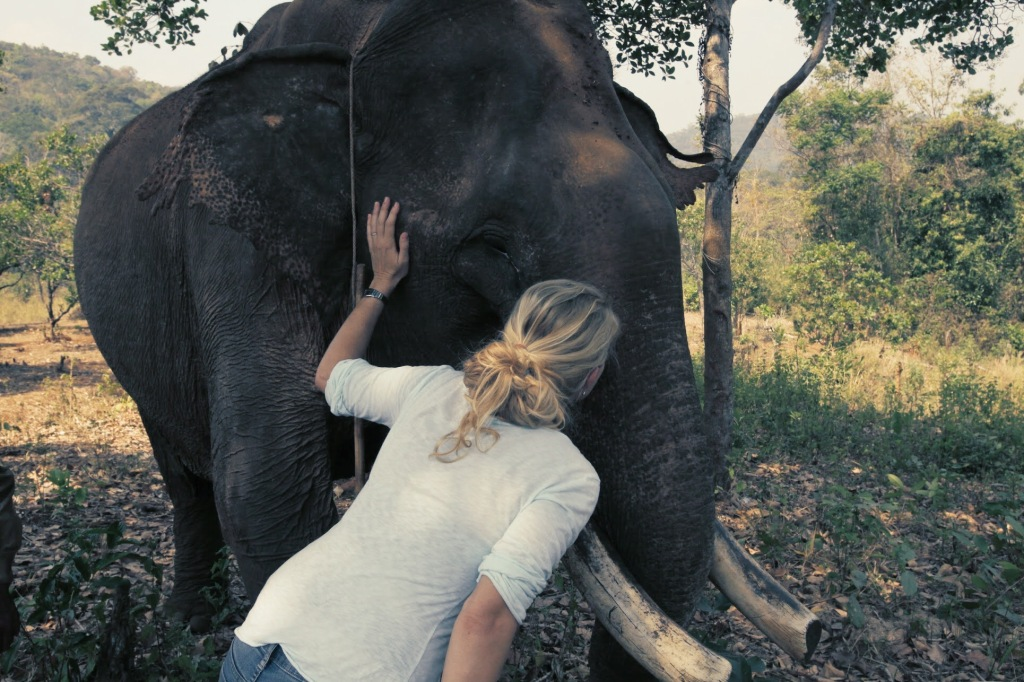 kissing an old elephant
